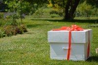 pudełko z prezentem w parku